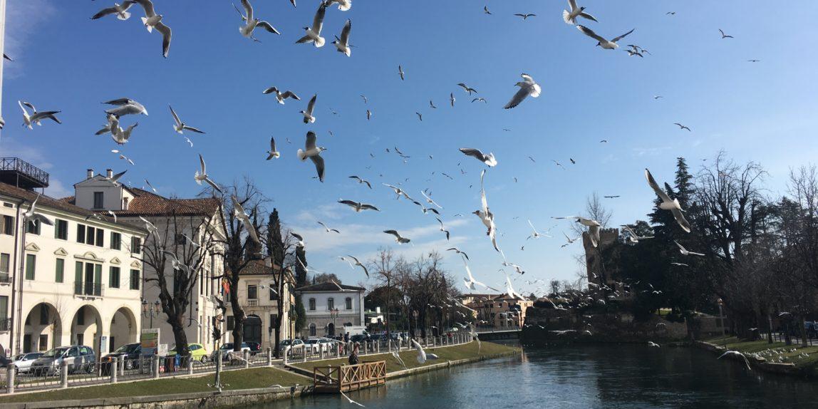 Fuehrung in Treviso